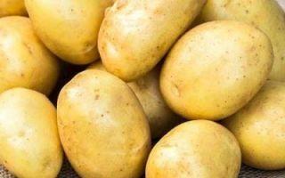 Картофель банба (banba): описание сорта, фото, отзывы, посадка и уход