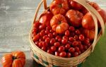 Проращивание семян томатов на рассаду