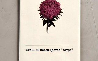 Астра в грунт семенами: когда сеять, как сажать весной