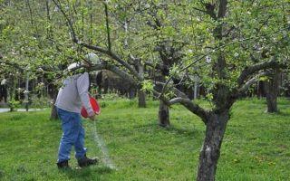 Яблоня Спартан: описание сорта и фото, отзывы садоводов, посадка
