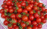 Томат деревенский: отзывы, описание сорта, урожайность, фото