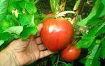 Семена томатов сибирской селекции: самые урожайные и лучшие сорта, новинки и отзывы.