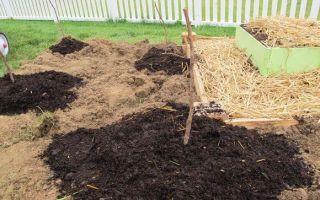Посадка ремонтантной малины осенью: правила осеннего ухода, размножение, видео