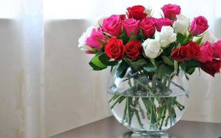 Как хранить розы: при какой температуре
