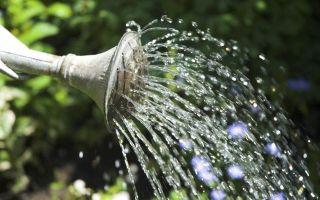 Гайлардия: выращивание из семян, когда сажать на рассаду, фото