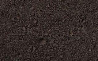 Ранние сорта перца сладкого для открытого грунта: названия и характеристика