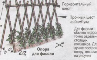Как подвязать горох в открытом грунте на грядке: способы + фото