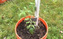 Температура выращивания рассады томатов: какая считается оптимальной