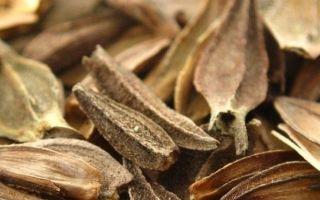 Как собрать семена цинии: правила сбора в домашних условиях