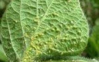 Огурец маринда f1: описание, отзывы о сорте, фото
