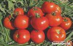 Томат лоджейн f1: описание сорта, фото, отзывы