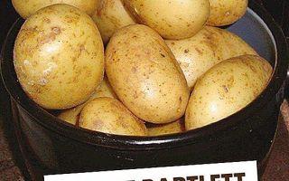 Картофель джура (айл оф джура, isleofjura): отзывы, описание сорта, фото, как хранится, посадка и уход