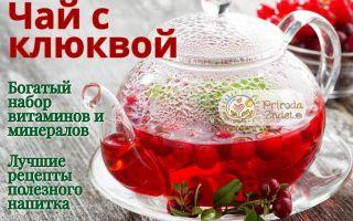 Чай с клюквой, имбирем, лимоном, медом, мятой: польза и вред напитка, правила приготовления