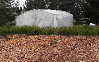 Посадка нарциссов осенью в грунт: когда сажать в подмосковье и сибири