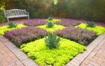 Почвопокровные многолетники, цветущие все лето: основные требования к выращиванию