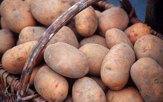 Картофель славянка: описание сорта, фото, отзывы