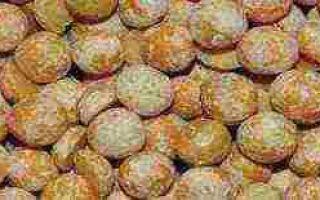 Сорта гороха: мозговой, лущильный, сладкий, крупный, скороспелый