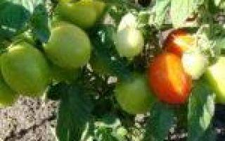 Томат валентина: характеристика и описание сорта
