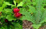 Кислая почва — как определить по сорнякам + фото