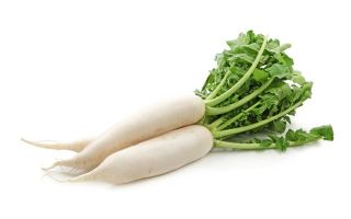 Белая редька: польза и вред для здоровья, свойства, рецепты приготовления