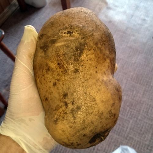 Картофель Метеор: описание сорта, отзывы, фото