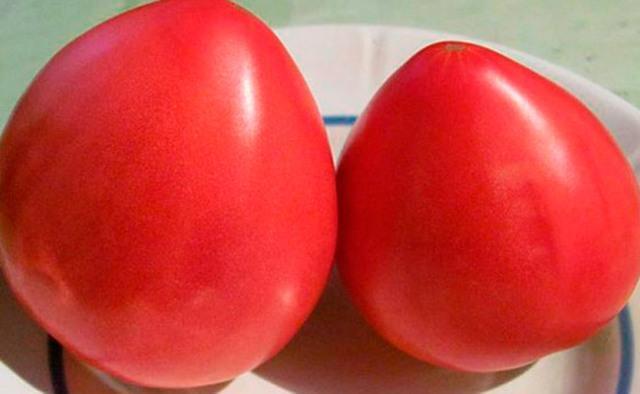 Сорта томатов с крупными плодами