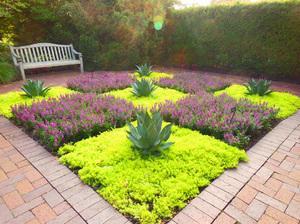 Ползучие садовые растения