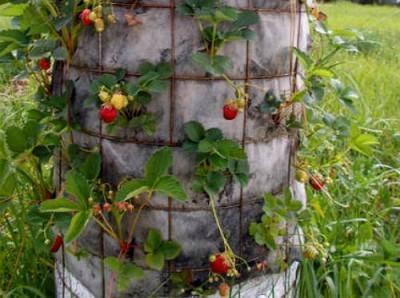 Вертикальное выращивание клубники: описание