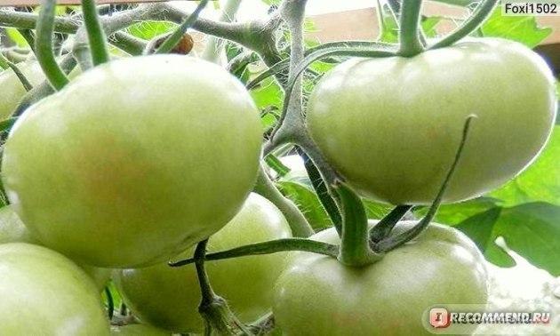 Томат Желтый гигант: характеристика и описание сорта, урожайность, отзывы