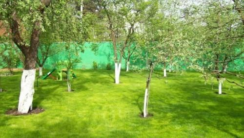 Совместимость плодовых деревьев в саду - таблица