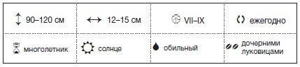 Подготовка к посадке гладиолусов на Урале