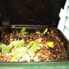 Картофельные очистки для смородины: лучшее удобрение, для чего нужны, как подкормить, видео