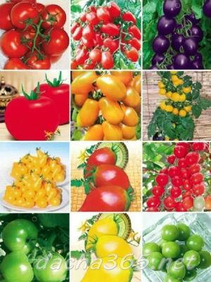Народные средства от фитофторы на помидорах