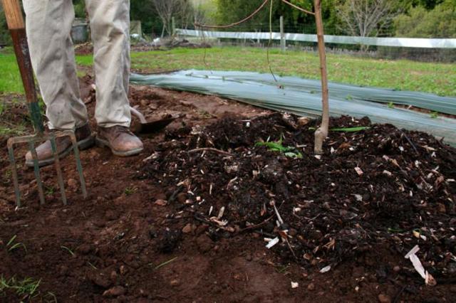 Подкормка яблонь осенью удобрениями: чтобы плодоносила, после сбора урожая