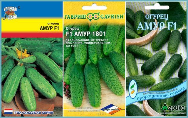 Огурцы Амур: отзывы, фото, описание и характеристика сорта, урожайность