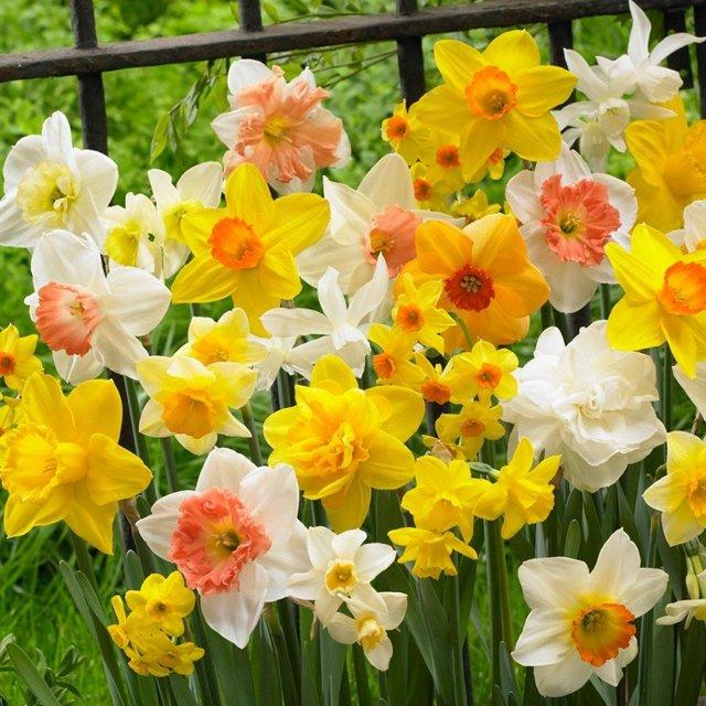 Какие цветы сажать осенью на даче: однолетние, многолетние, луковичные, семенами.