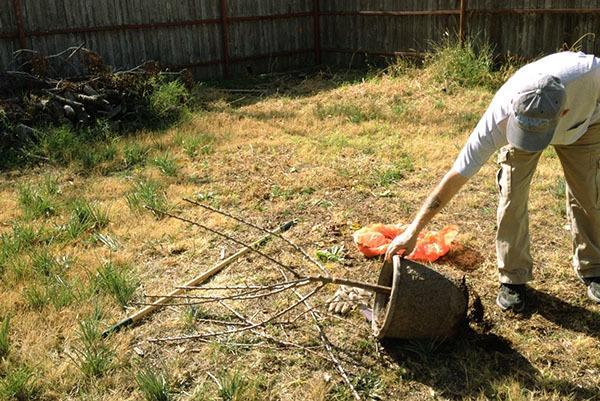 Когда весной сажать плодовые деревья и кустарники