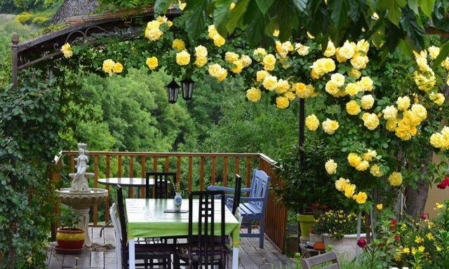Как размножается плетистая роза