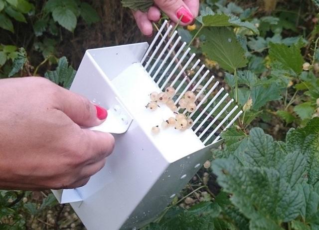 Комбайн (совок, машина) для сбора черники своими руками: как сделать, чертежи с описанием, фото, видео, как собирать ягоды