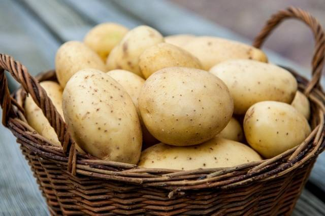 Картофель Мерлот: описание сорта, характеристика, фото, отзывы