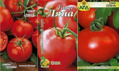 Томат Ляна: описание сорта, фото, отзывы