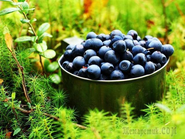 Черничный сок: польза и вред для здоровья, для глаз, состав, калорийность, применение