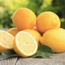 Как привить лимон, выращенный из косточки, в домашних условиях