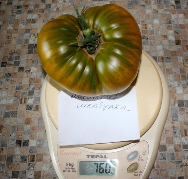 Томат Малахитовая шкатулка: описание сорта, фото, отзывы, урожайность