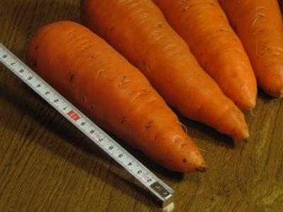 Морковь Абако