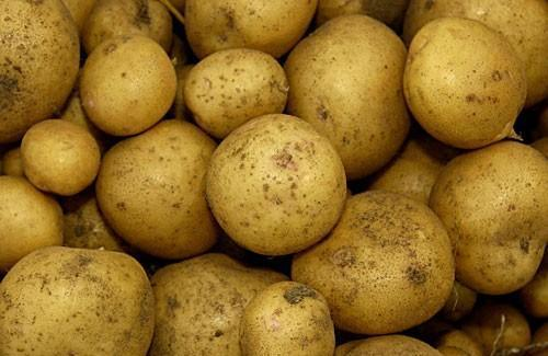 Картофель Ривьера: описание сорта, фото, отзывы