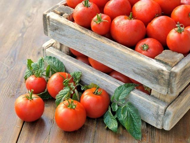Выращивание томатов без рассады