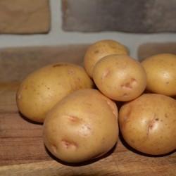 Картофель Ред Соня: описание сорта, фото, отзывы