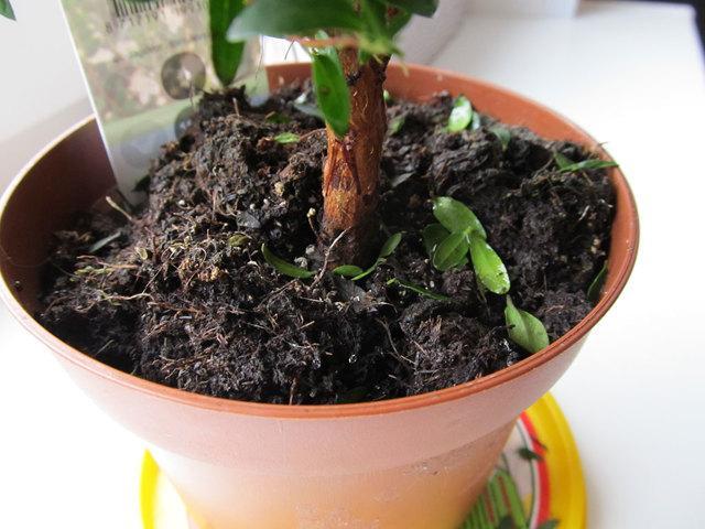 Плесень на земле в рассаде: что делать, как избавиться от белого налета