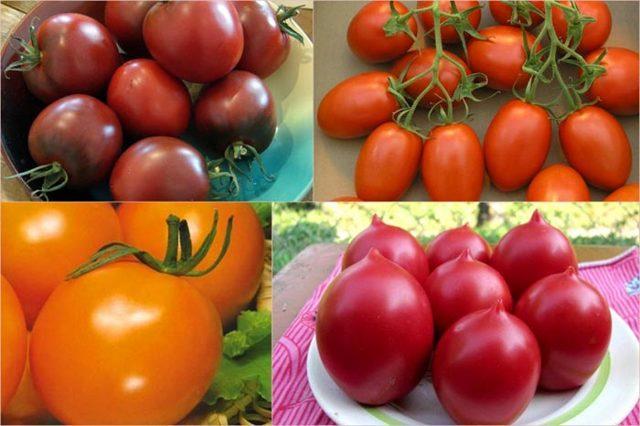 Сорта помидор для теплиц из поликарбоната